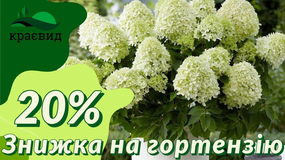 Знижка на гортензію - 20%